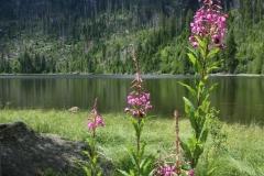 Plešné jezero 047