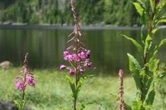 Plešné jezero 048