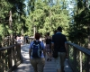 Stezka korunami stromů - Lipno 001