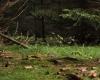 Šumava 132