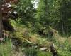 Šumava 202
