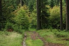 Šumava 241