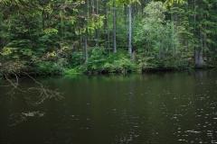 Šumava 265