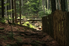 Šumava 273