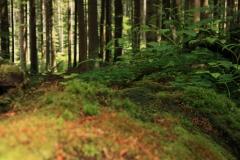 Šumava 279