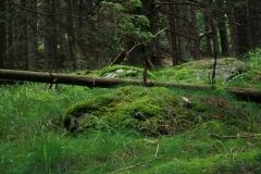 Šumava 299