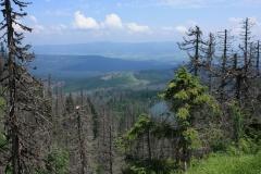 Šumava 413