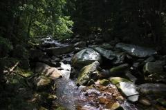 Šumava 2015 083