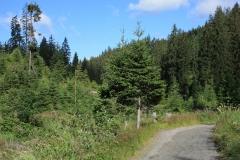 Šumava 2015 134