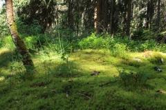 Šumava 2015 146